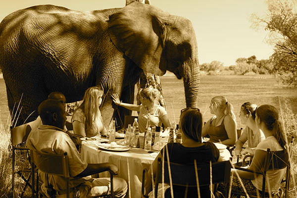 LUNCH WITH THE ELEPHANTS