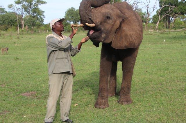 Elephant encounter in Livingstone - Zambia