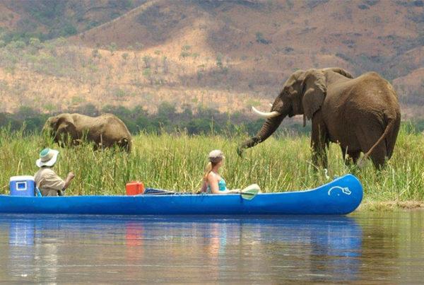 safpar-activities-lower-zambezi-safari-canoeing