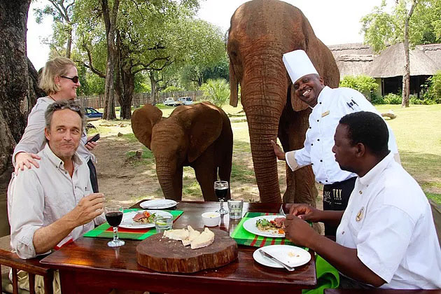 EXCLUSIVE ELEPHANT CAFÉ LAUNCHES ON THE ZAMBEZI'S RIVER-BANK