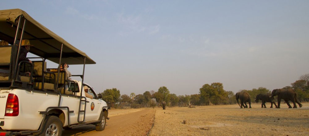 safpar-activities-safari-game-drives