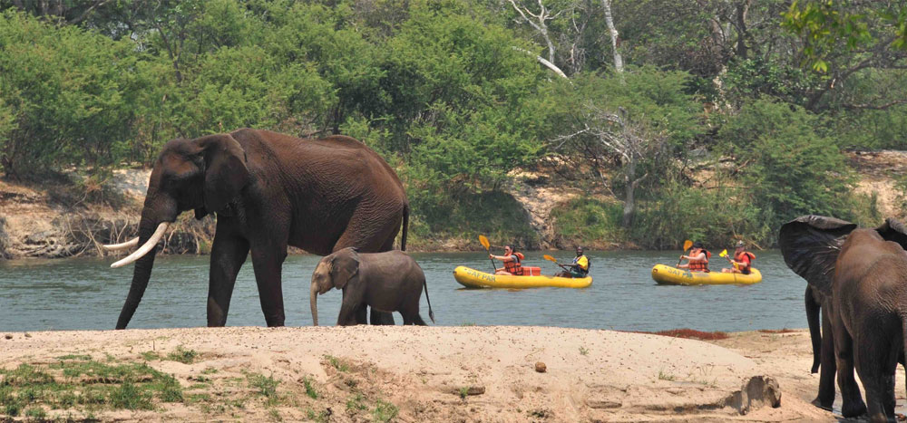 safpar-zambezi-canoeing-safaris