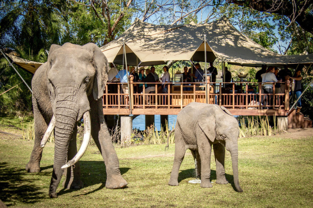 THE ELEPHANT CAFE