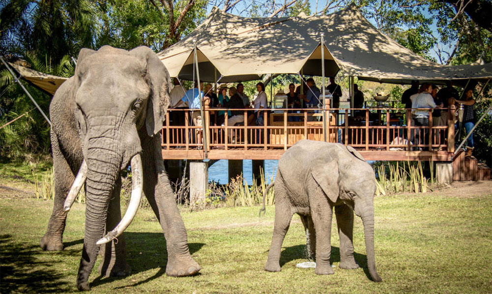 the-elephant-cafe-livingstone-restaurant