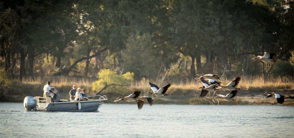 safpar-activities zambezi river safari