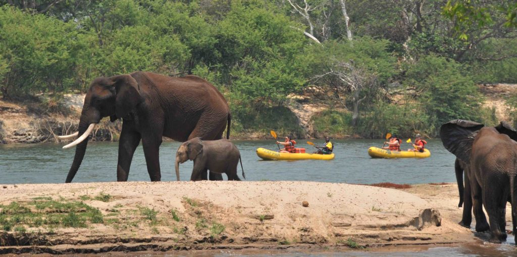 Canoeing past elephant Zambezi River Africa