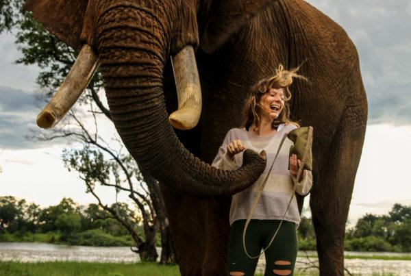 Zambezi River Elephant