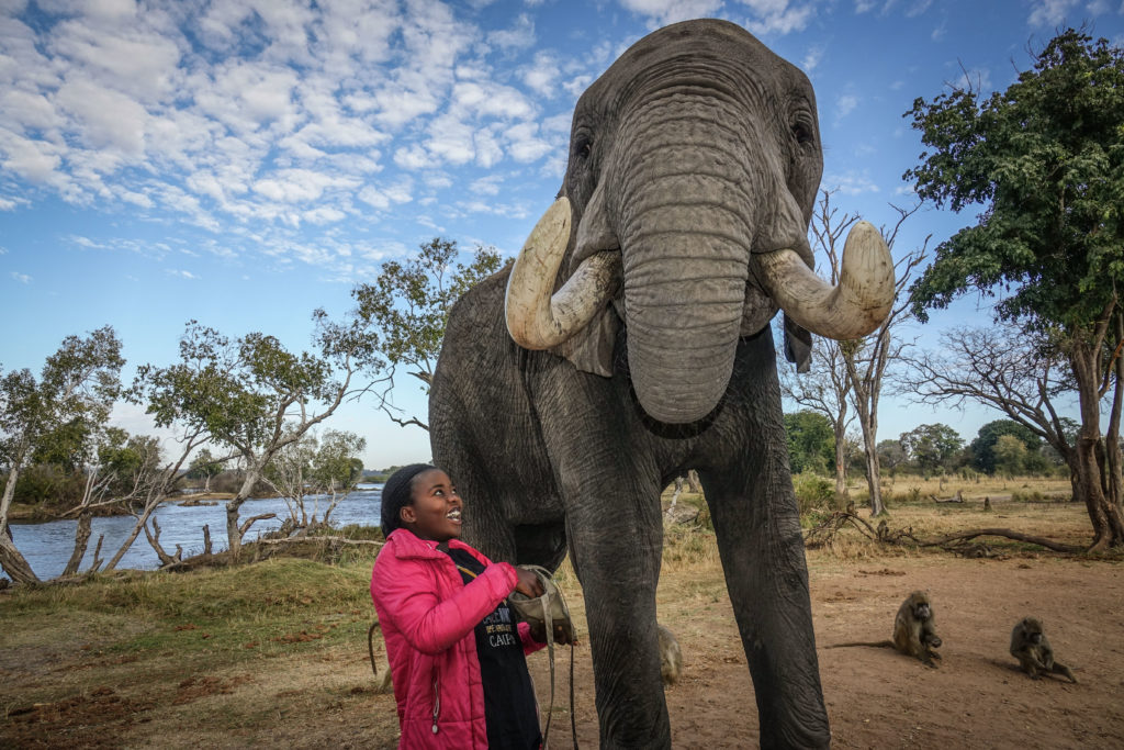 African Elephant, Zambezi, charity, vulnerable children.